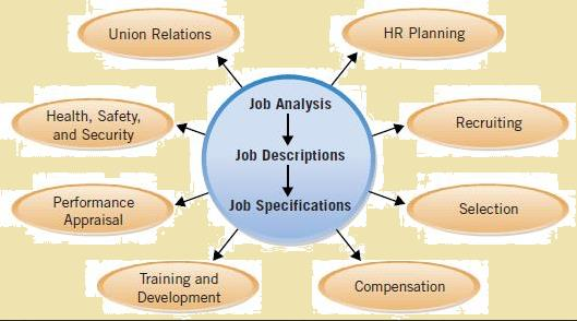 Job Analysis Definition Process  Methods  Studiousguy