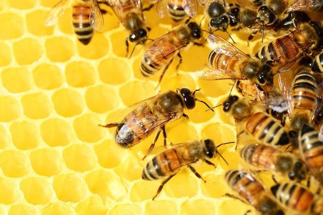 geometry of beehive