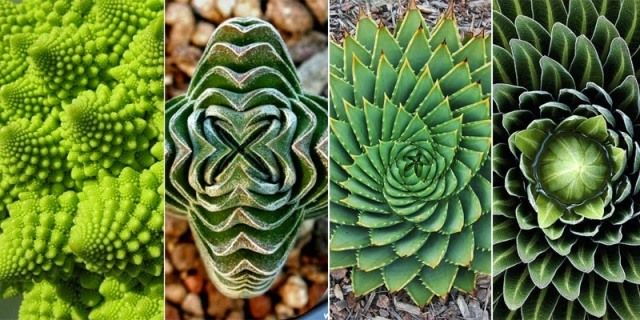 role of geometry in nature