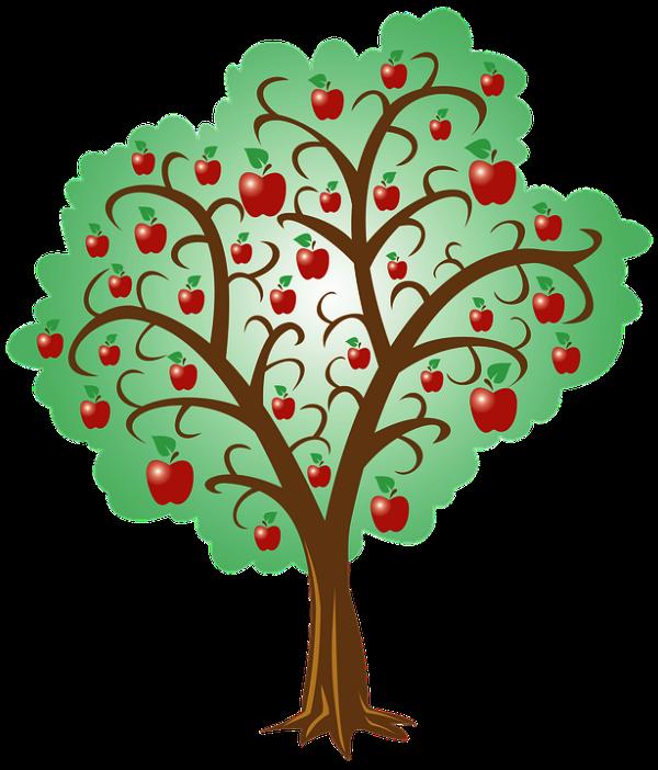 Apple tree root system